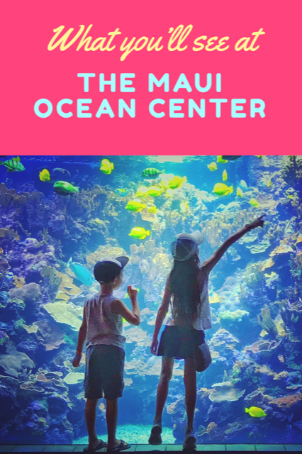 What to see at the Maui Ocean center