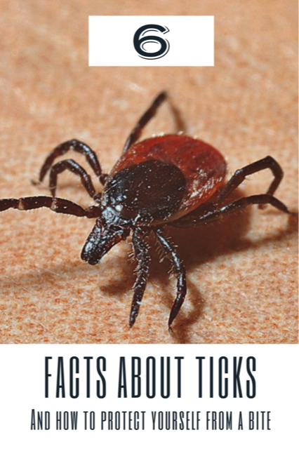 6 facts about ticks and how to protect yourself from a bite.